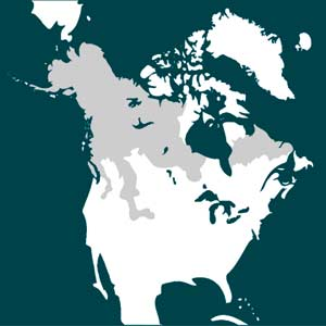 "Dark Grey indicates ""wolverine"" habitat. You'll note its mostly in Canada."